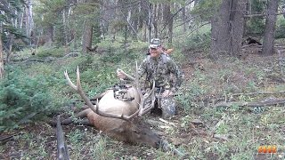 2014 Colorado Archery Elk Hunt - Call 'em to Your Toes! 5x6 Heart-Shot
