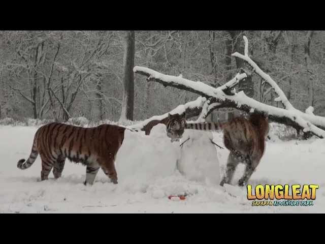 Longleat zoo experience essay