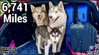Huskies Travel 6,741 Miles | Cross Country Road Trip with Dogs