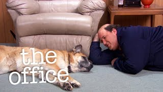 Is Kevin's Dog Dead?  - The Office US