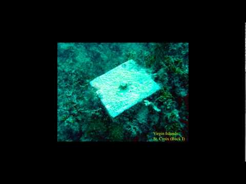 Reef Resilience Webinar: Notes from the Field: Caribbean Corals, 40 Years Later