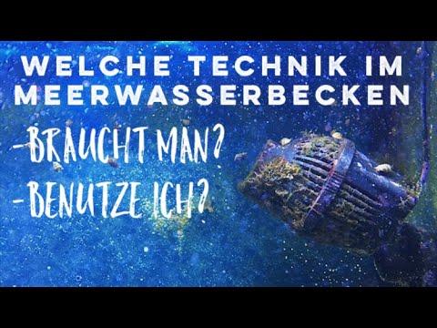 Technik im 360l Meerwasserbecken - ohne Technikbecken / DasHobbyAquaristik-Meerwasser
