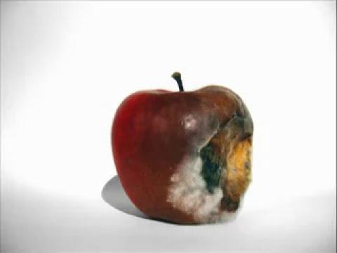 Manzana se descompone por acción de los Microorganismos