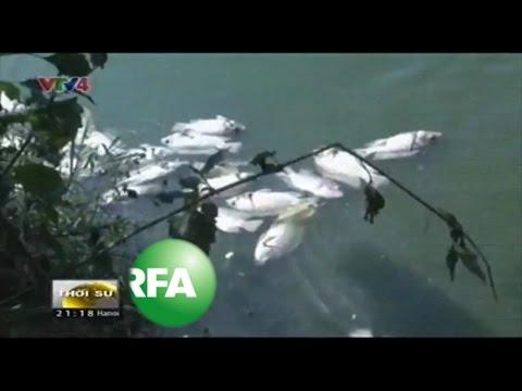 Vietnam Fishermen Blame Steel Factory for Mass Fish Deaths