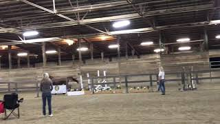 2016 Rubignon Filly - Jump Chute - First time