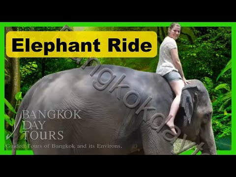 Elephant Day Tour Thailand by Bangkok Day Tours