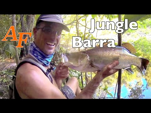 Barra Fishing Video Soft Plastic Lure Fishing Barramundi n Tarpon Jungle fishing Barra Mania Mancing