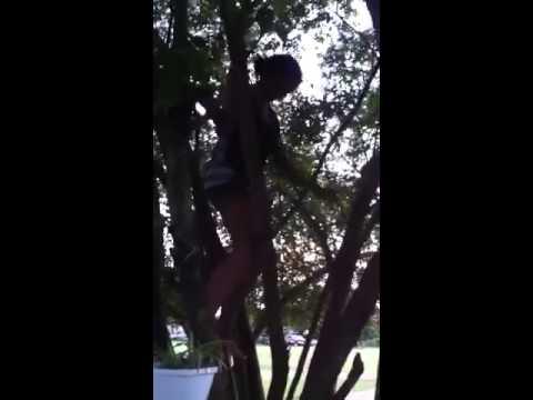 Britt in a tree