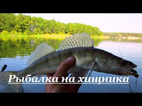 рыбалка на бомбарду на хищника