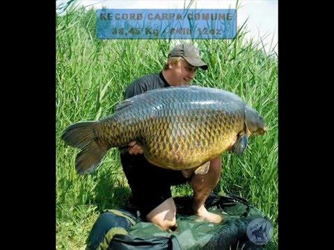 Big fish grandi pesci d 39 acqua dolce youtube for Pesci acqua dolce commestibili
