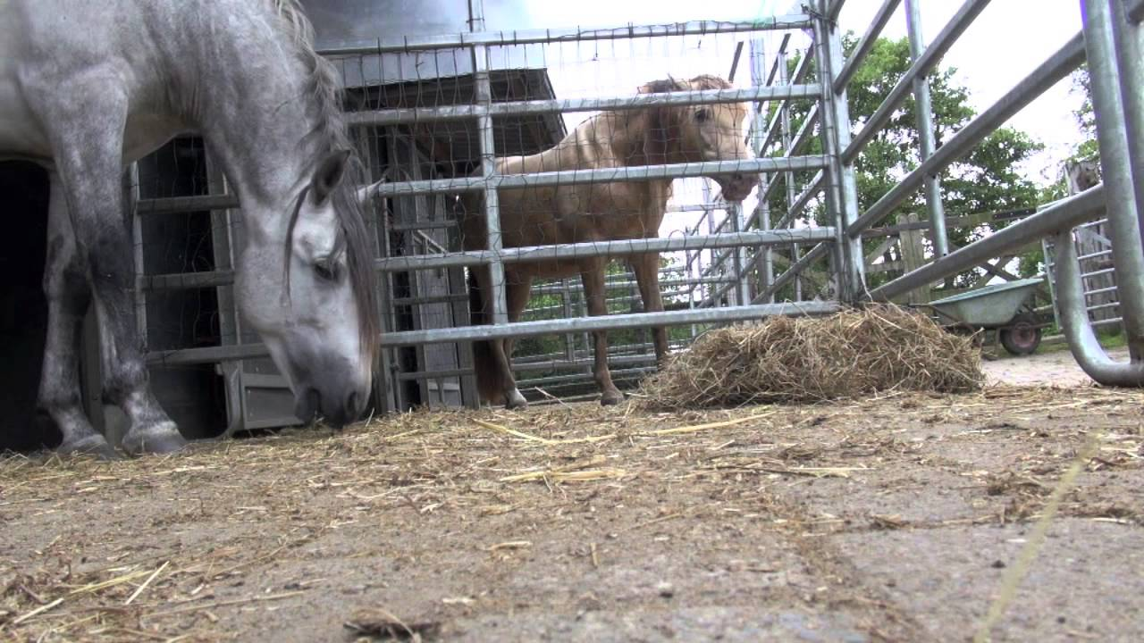 Imprinting Human Imprint a Foal With Human