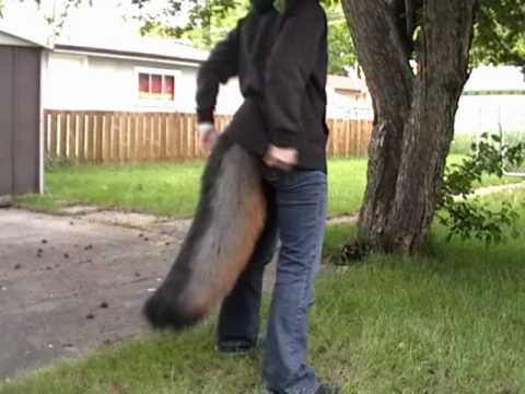 Moving Tail