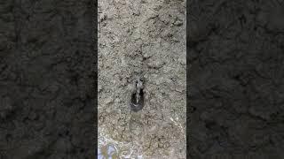Mancing belut ternyata ular besar yg di dpat