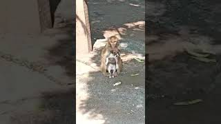 """"""" Cute monkey & Funny dog """""""