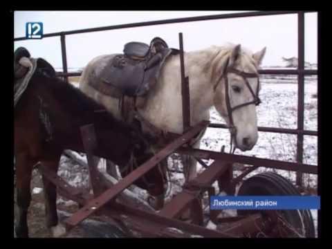 «Распил» хозяйства в Любинском районе привел к гибели лошадей