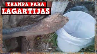 Trampa Para Lagartijas, iguanas y Otros Reptiles Automatica Casera / YMX SUPERVIVENCIA