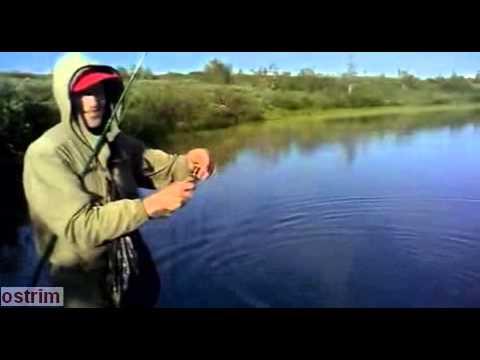 клевая рыбалка лена