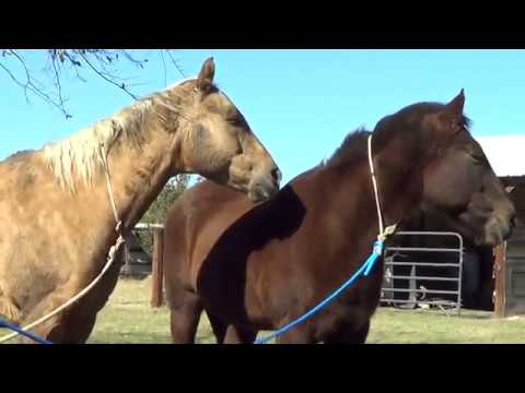 Why Wild Horses Don't Need Hoof Trims or Horseshoes - Causes of Hoof Problems