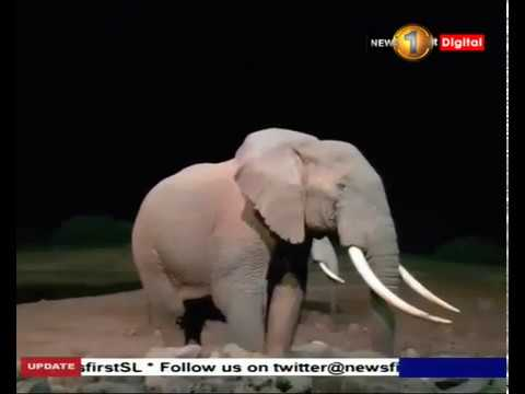 four elephants kille|eng