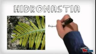 Función de relación en las plantas