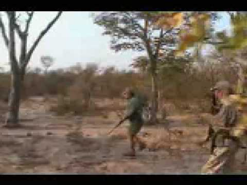 Lion Attacks Safari Hunter