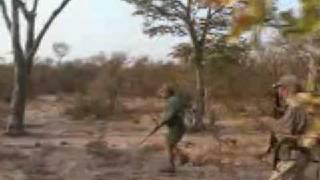 සිංහයාට වෙනදේ බලන්න  Lion Attacks Safari Hunter