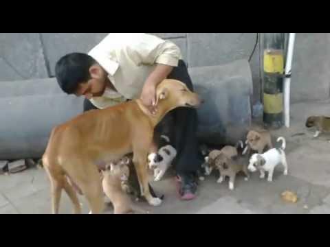 Street Dog Rescue Delhi