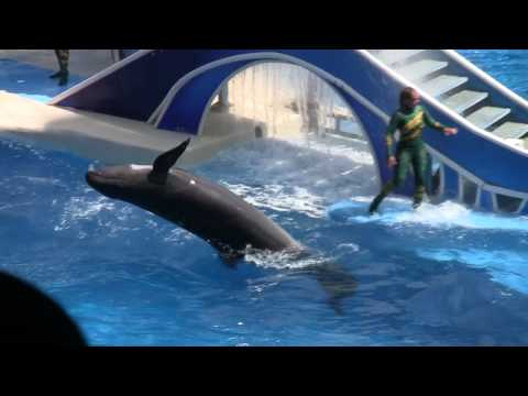 Dolphins - Seaworld Orlando - Canon Vixia HF S10 / HF S100 / HF S11