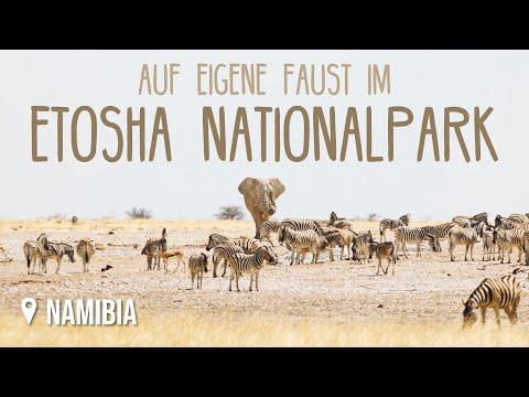 Etosha Nationalpark • Namibia • Weltreise Vlog #148