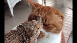 Funny amazing cats: best videos, part 2