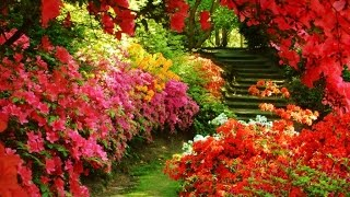 Ideas para decorar un jardín - Incluye galería de fotos espectaculares