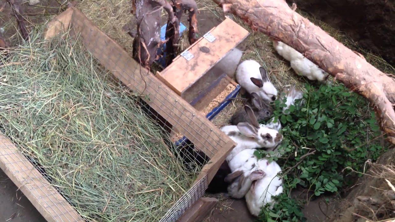 Как правильно вырастить кролика в домашних условиях
