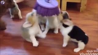 Funny Cat and Dogs Compilation - by Pet Friend