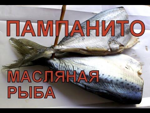Масляная рыба. Пампанито.