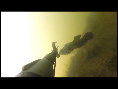Коблево. Подводная охота. Уж vs бычки.