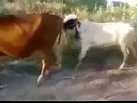 Epic Animal    Fucking Fail