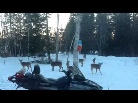 Rangeley Me winter deer feed