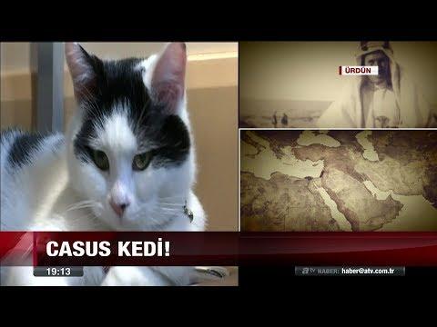 Casus kedi  - 23 Kasım 2017