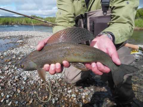 Fly fishing the naknek river alaska july 2010 youtube for Alaska out of state fishing license