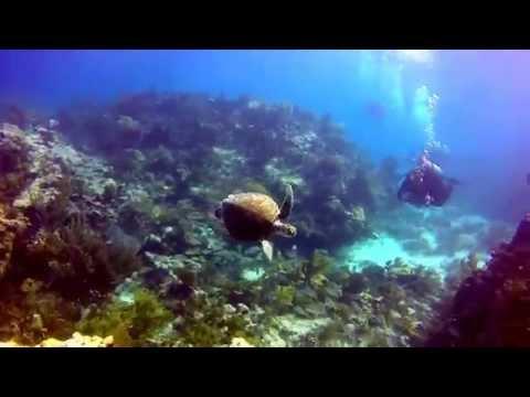 Chasing sea turtles in Key Largo