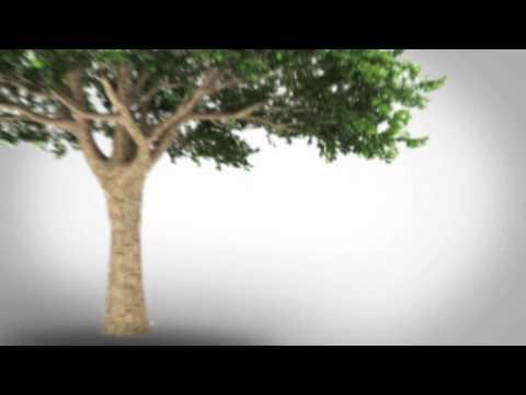 The Longevity Project --  TRAILER