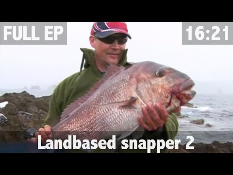 Land based snapper fishing Part II