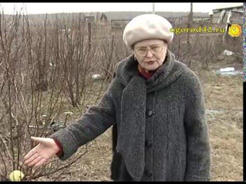 Что посадить между деревьями в саду – использование междурядий (советы кандидата с.х. наук)
