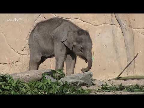 Sandmännchen beim Elefantenbaby
