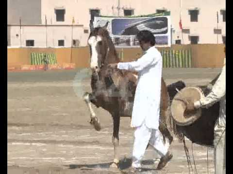 Pak Rangers Horse & Tattoo Show Due Spring Festival Inauguration Ceremony Pkg By Shahid Sipra City42