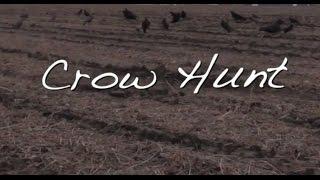 Illinois Crow Hunt