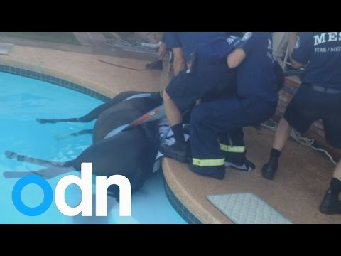 Horse stuck in swimming pool rescued by firefighters