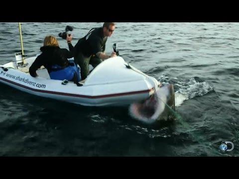 надувная лодка акула видео
