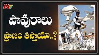 పావురాలతో హైదరాబాద్కు పెను ప్రమాదం..! | People in the Vicinity of Pigeons | Hyderabad | NTV