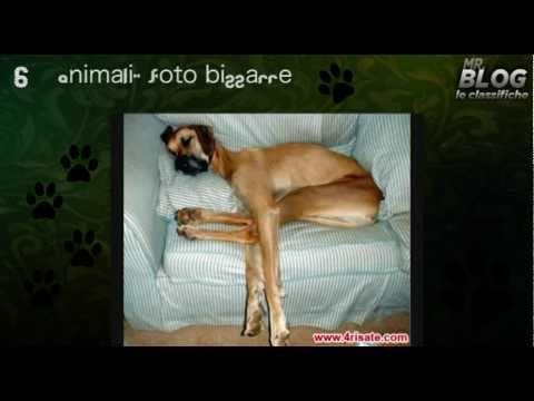 Mr. Blog – Animali divertentissimi – Gatti e cani ai primi posti